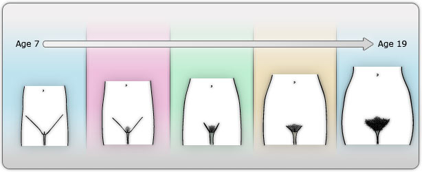 Pubic hair development stages