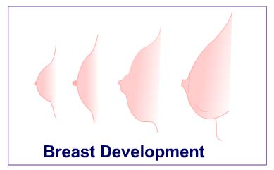 Breast Development in Pubescent Girls - HowStuffWorks