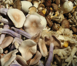 how to cook mushrooms for weight loss