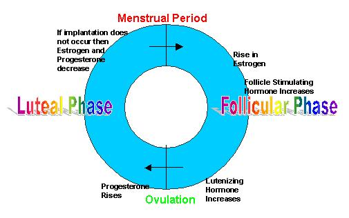 Endocrinology of the Menstrual Cycle