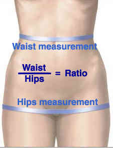 After you determine your waist circumference, you're ready to check out your waist-to-hip ratio, which is a measurement that compares the size of your hips to the size of your waist. The smaller your waist is in comparison to your hips, the lower your risk for heart disease.
