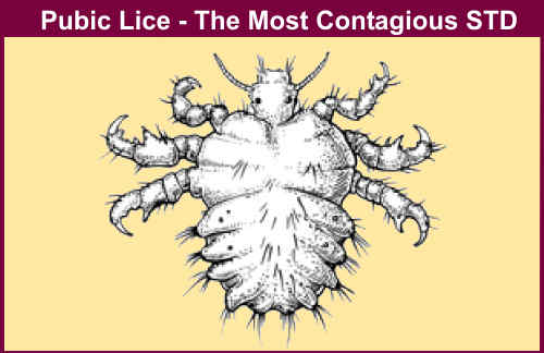 Pubic lice - Women Health Info Blog