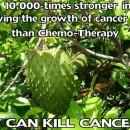Anticancer Graviola tea