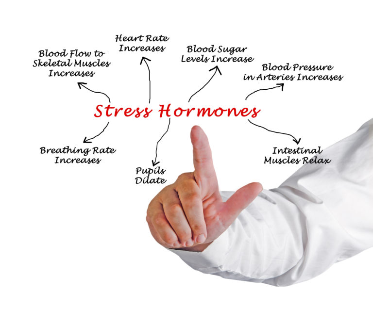 Main stress hormones implication