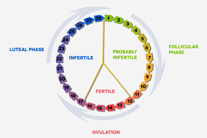 Normal menstrual cycle