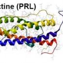 Prolactine et la santé des femmes