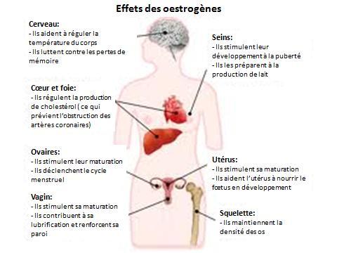 effect of testosterone on women