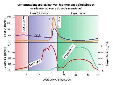 hormone oestradiol