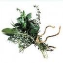 Plantes somnifères