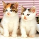 Chats qui flairent le cancer