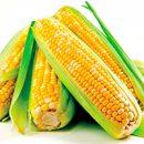 Maïs et santé