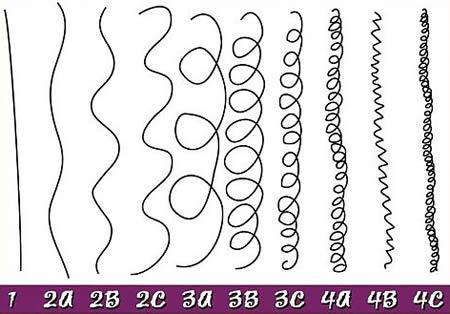 Système de classification des cheveux d'Andre Walker